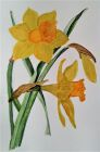 'Golden Daffodils' by Christine Bythe